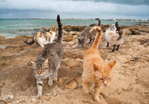кошачий пляж на сардинии 12 (600x421, 242Kb)