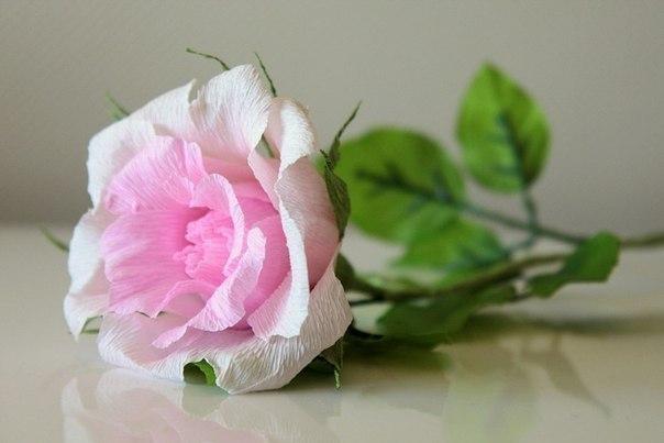 роза из бумаги 9 (604x403, 130Kb)