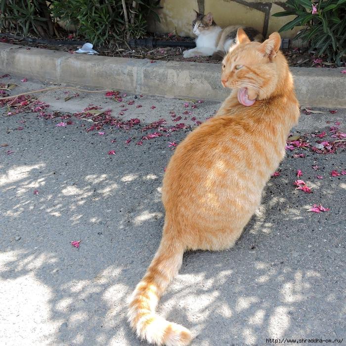 Кипр, май 2016 (124) (700x700, 527Kb)