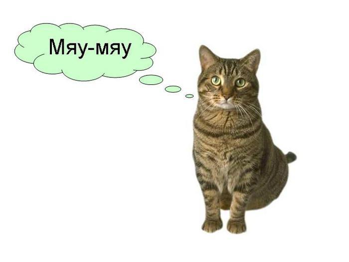 Рассказ кота барсика