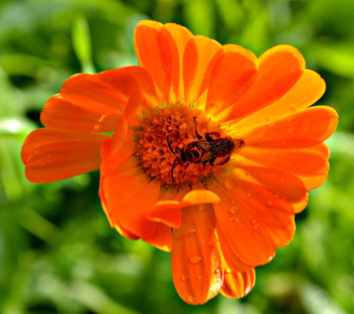 16 06 2016 огород, цветы 040 (700x621, 463Kb)