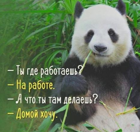 панда (467x439, 121Kb)