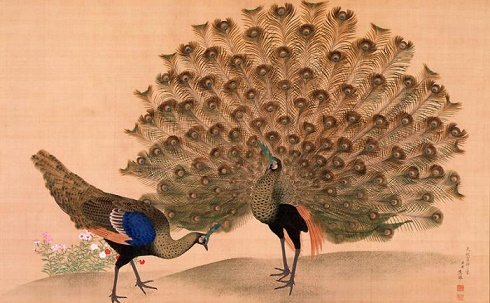 Okyo_Peacock_and_Peahen-700x432 (490x303, 74Kb)