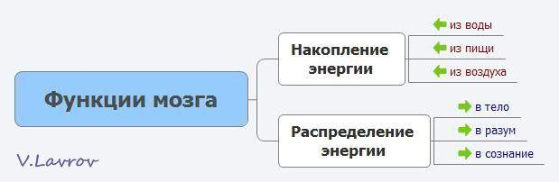 5954460_Fynkcii_mozga (619x202, 14Kb)