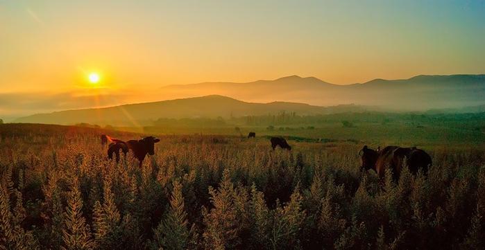 «Одинокий пастух» Джеймса Ласта. Я за мир на земле и красоту планеты!