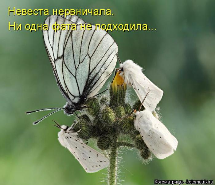 kotomatritsa_4 (700x602, 338Kb)