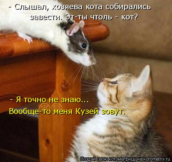 kotomatritsa_l (600x566, 285Kb)