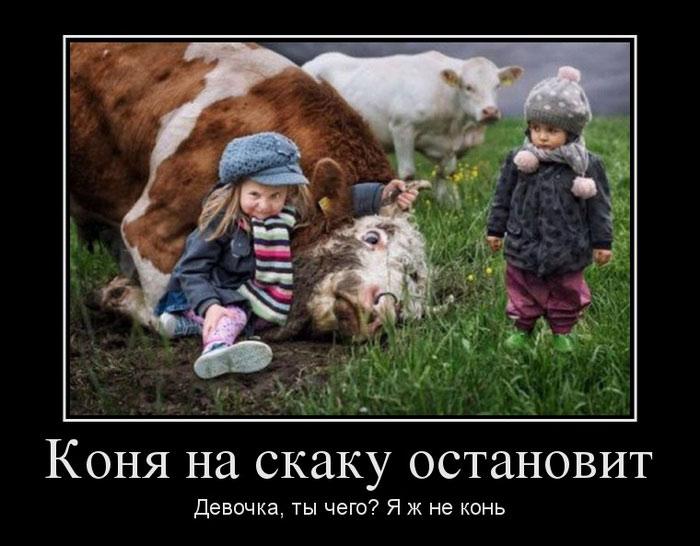 3821971_konya_na_skak3 (700x546, 76Kb)