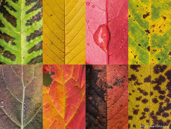 Волшебные краски осенних листьев (1) (700x527, 446Kb)