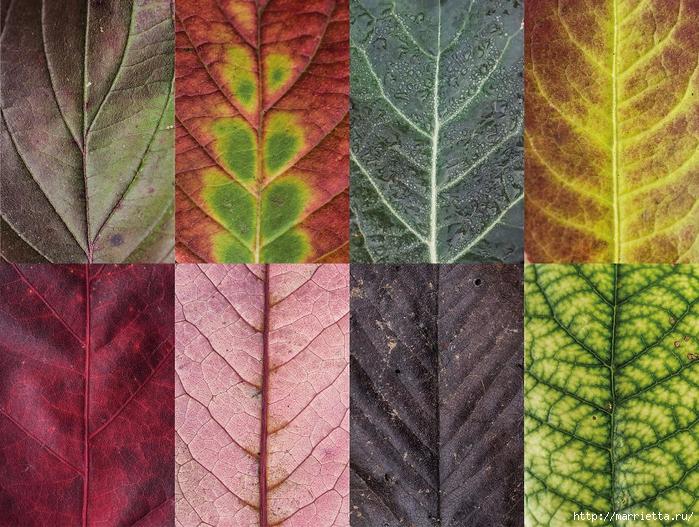 Волшебные краски осенних листьев (3) (700x527, 417Kb)