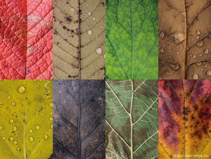 Волшебные краски осенних листьев (5) (700x527, 417Kb)