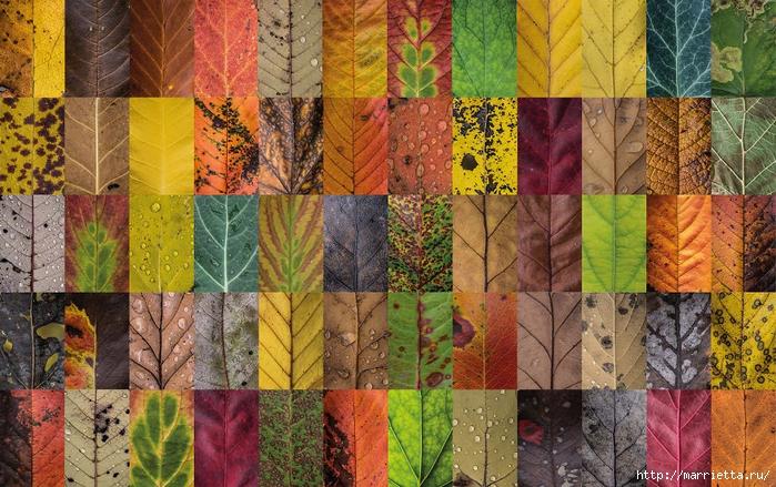 Волшебные краски осенних листьев (7) (700x439, 365Kb)