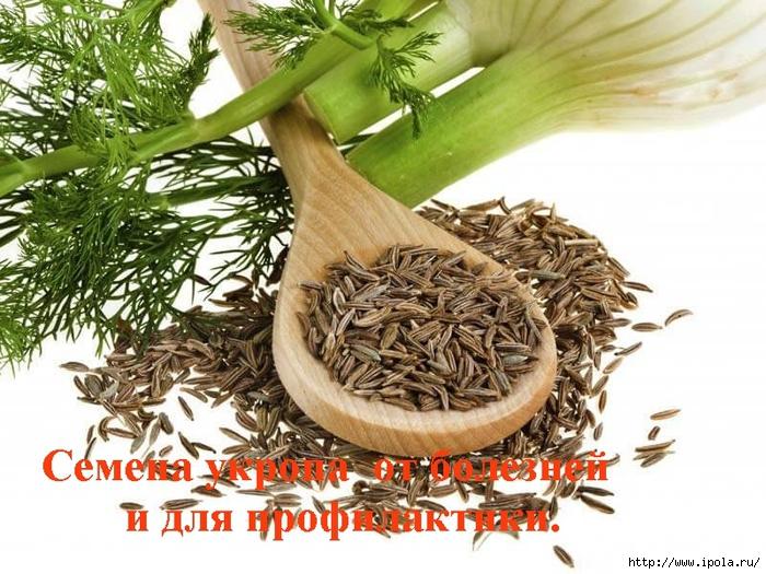 """alt=""""Семена укропа  от болезней и для профилактики.""""/2835299_ (700x525, 314Kb)"""