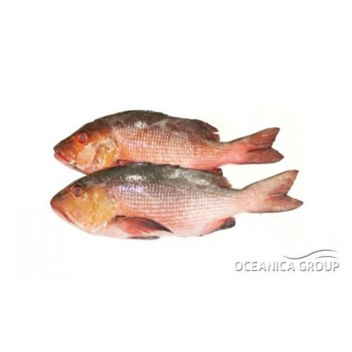 рыба (500x500, 25Kb)