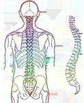 spine-257870_540- (123x150, 38Kb)