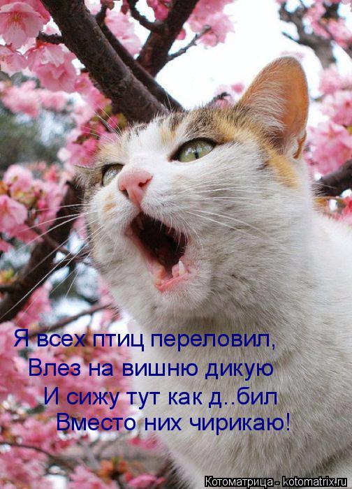 kotomatritsa_0 (504x700, 359Kb)