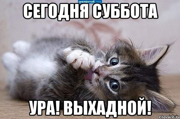 5644427_kote_45223032_orig_ (600x398, 56Kb)