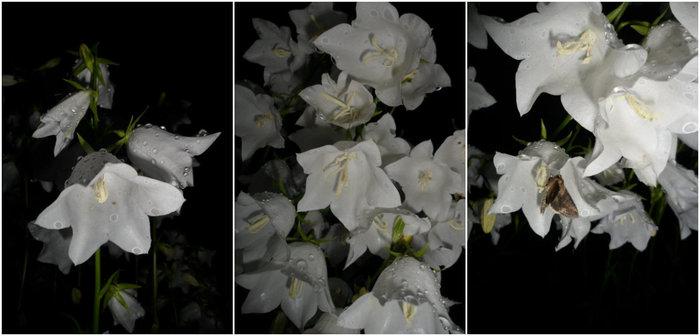 collagefg (700x336, 46Kb)