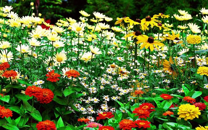 Free-flower-garden-hd-nice-wallpaper-download-background-picture-9187-1280x800 (700x437, 588Kb)