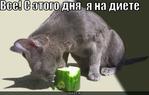 ������ chto_predlagaet_pit_ot_pohudenija_malysheva (500x318, 89Kb)