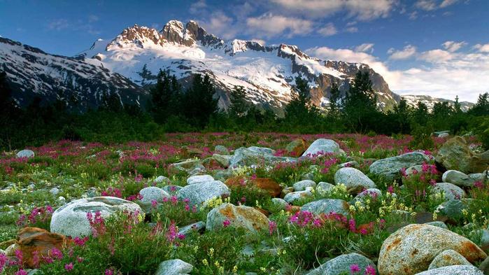 цветы и камни 17 (700x393, 398Kb)