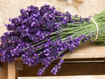 Превью lavendea (640x480, 303Kb)