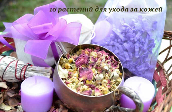2749438_10_rastenii_dlya_yhoda_za_kojei (700x457, 534Kb)
