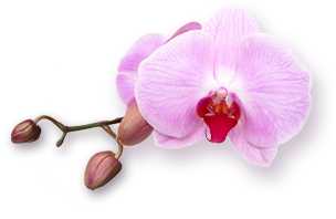 5043945_orchid (304x198, 56Kb)