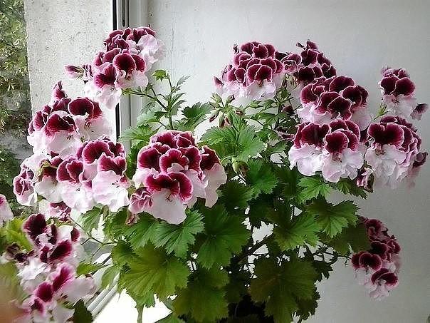 photo_1467687960 (604x453, 98Kb)
