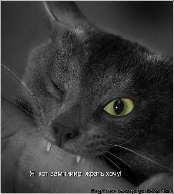 про котов4 (574x640, 68Kb)