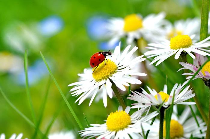 spring-mood (700x465, 99Kb)
