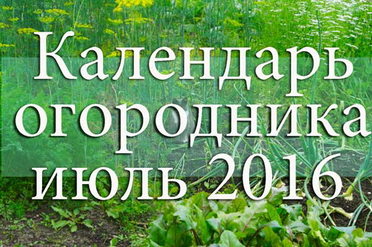 1458057576_kalendar-ogorodnika-iyul-2016 (530x353, 127Kb)
