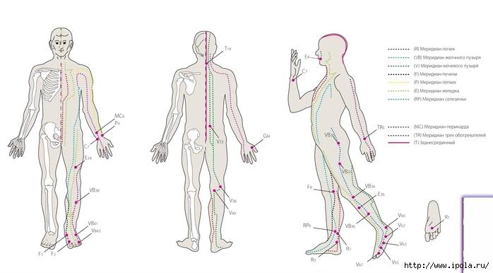"alt=""Акупунктурный массаж поможет при проблемах со здоровьем""/2835299_Akypynktyrnii_massaj_pomojet_pri_problemah_so_zdorovem2_1_ (700x386, 120Kb)"