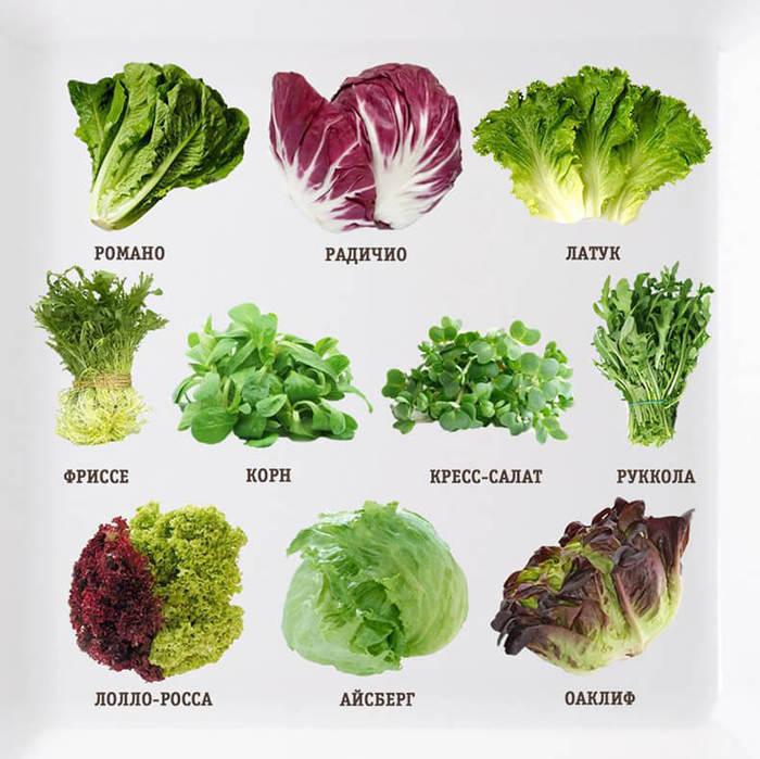 Чем полезен салат растение