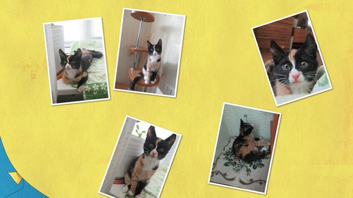 collage_photocat (700x393, 266Kb)