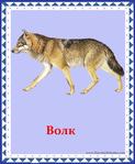 ������ волк (578x700, 302Kb)