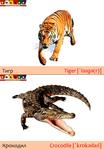 ������ Тигр+крокодил (489x700, 231Kb)
