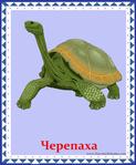 ������ черепаха (578x700, 316Kb)