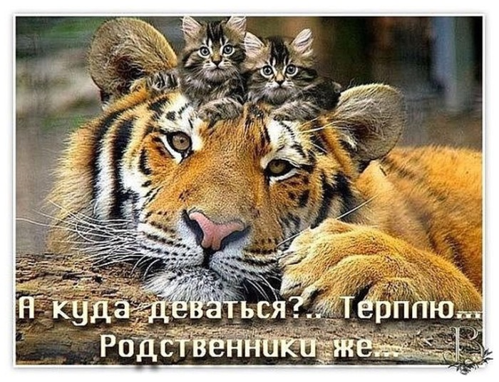 image (700x535, 163Kb)