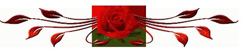 роза (480x101, 36Kb)