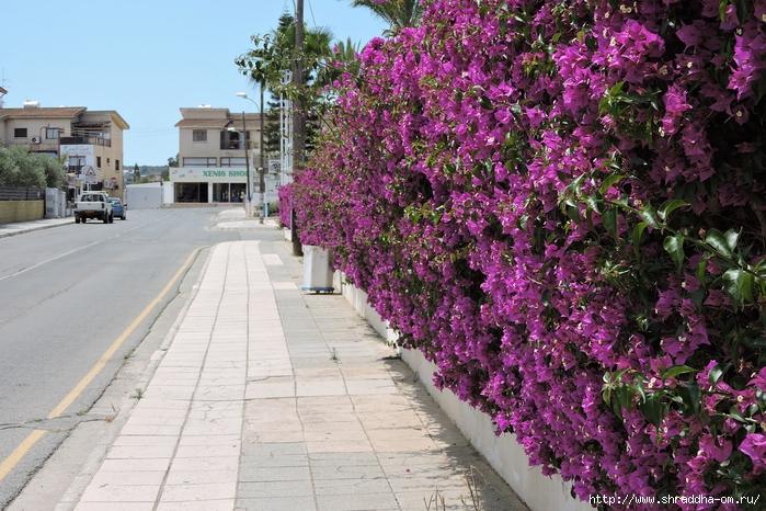 Кипр, май 2016 (136) (700x466, 347Kb)