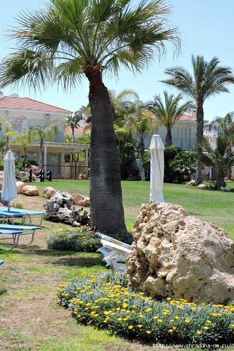 Кипр, май 2016 (140) (466x700, 406Kb)