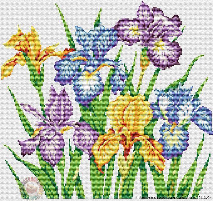 Irises (700x661, 459Kb)