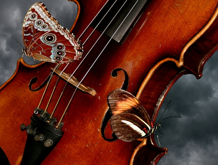2873132_butterflysandviolin_1_ (700x531, 301Kb)