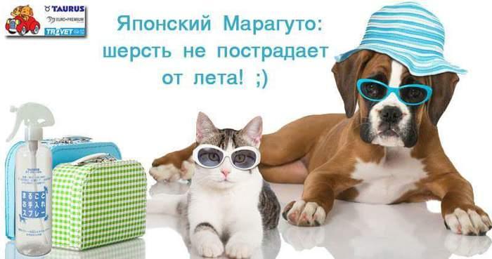 FB_IMG_1468874709379 (700x369, 33Kb)