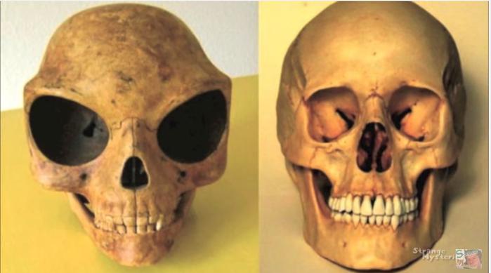 череп.2 (700x389, 213Kb)