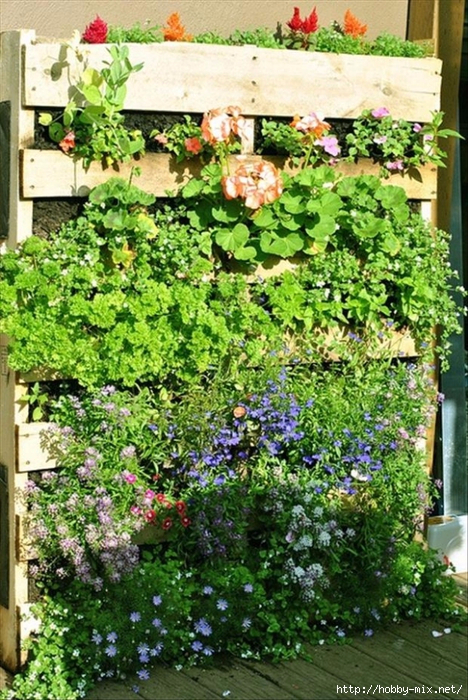 104481655_large_palletsusedinthegarden (468x700, 534Kb)