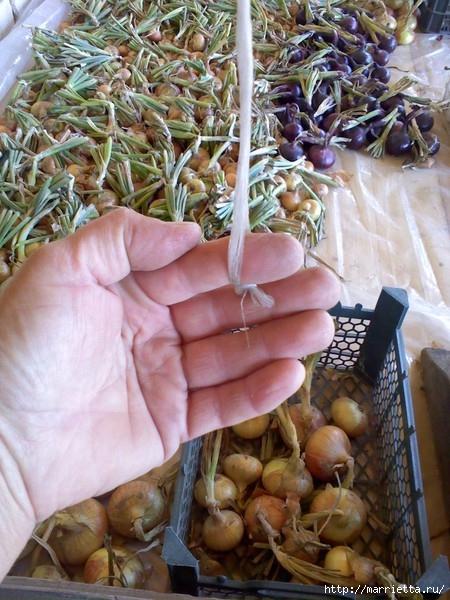 Как сплести косу из лука (2) (450x600, 220Kb)