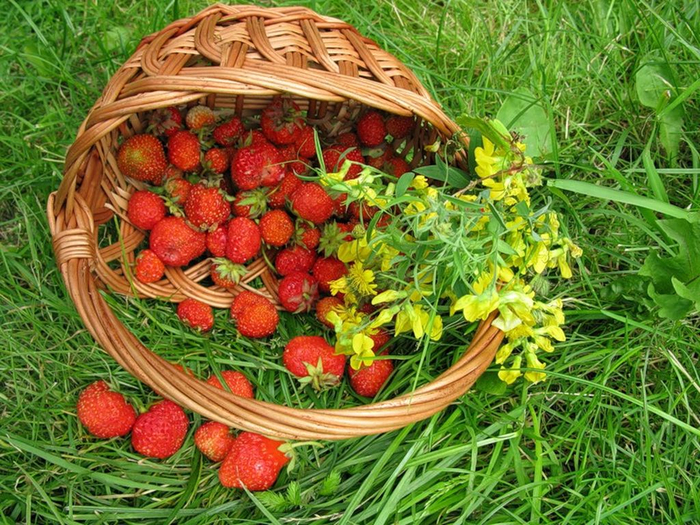 basket-of-strawberries (700x525, 579Kb)