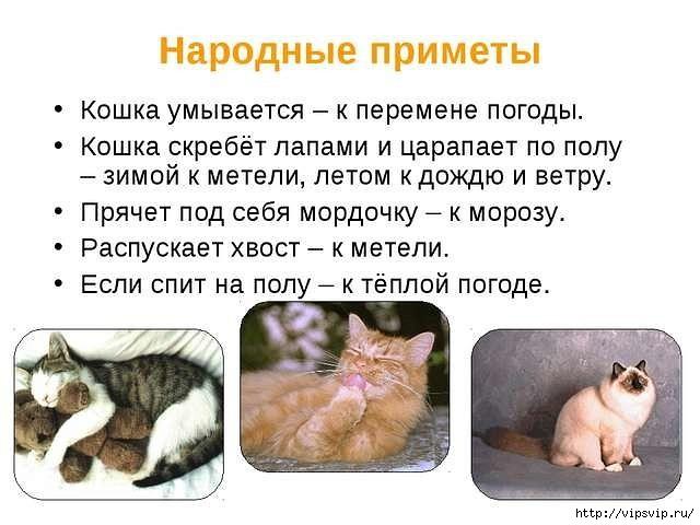 5745884_koshkini_primeti (640x480, 133Kb)